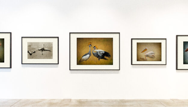 the gallery at the blake hotel african birds